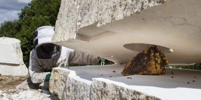Le Bee's bunker de Nicolas Floc'h