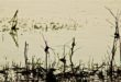 Les impressions de Loire du photographe Frank Lavenu