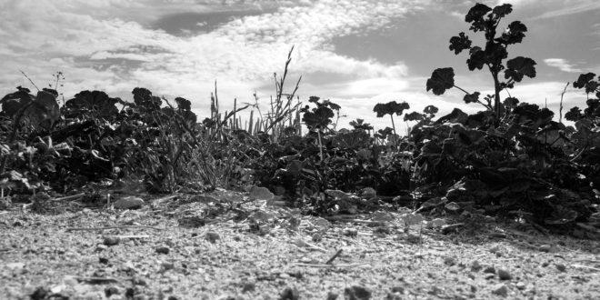 La vue du lapin – Photographies de Jean-Pierre Dubois